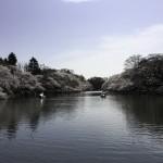 井の頭公園のさくら(4)